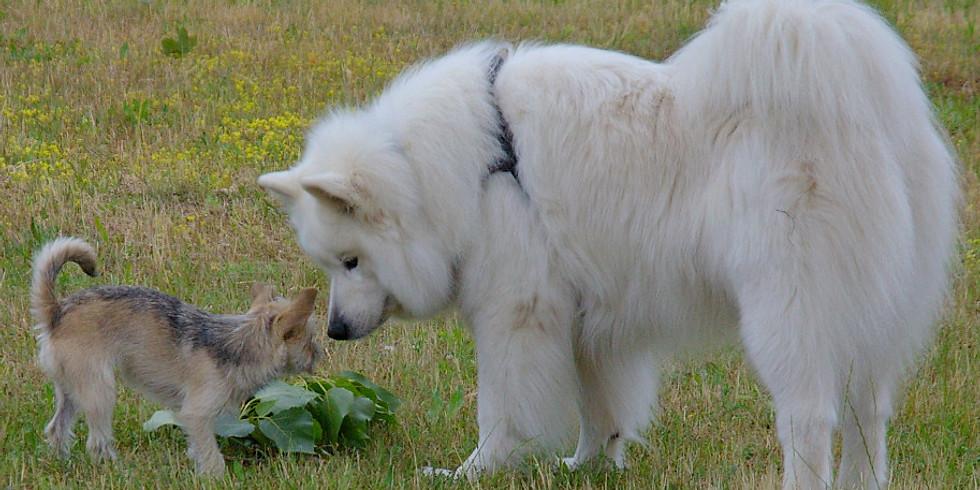 Tages-Seminar:  Mein Hund in  Aktion - beobachten, erleben und verstehen