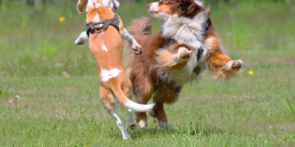 Vortrag: Maßregeln - ein Baustein der Gruppenstruktur bei Hunden