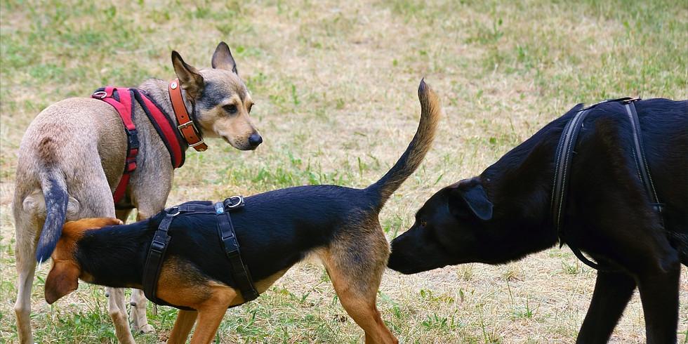 Vortrag: Die 4 B's der Hunde-Kommunikation
