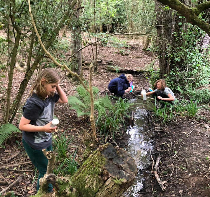 Woodland Activities by the Stream