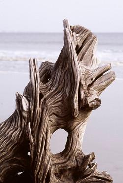 Driftwood, Beaufort
