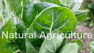 Natural Agriculture