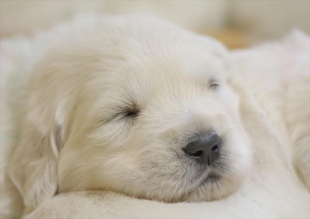 puppy (11).jpg