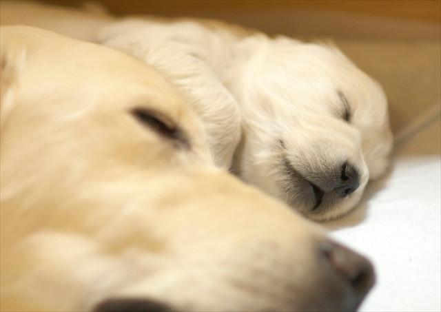 puppy (2).jpg