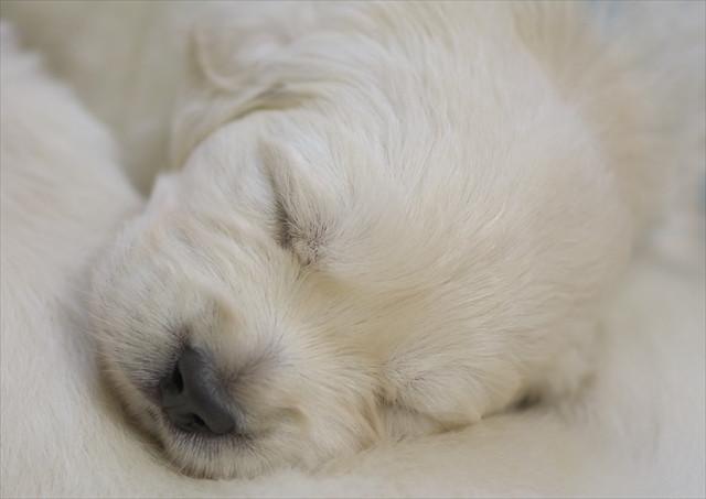 puppy (12).jpg