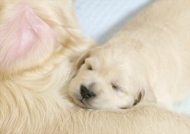 puppy (8).jpg