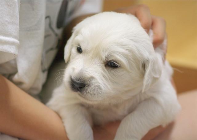 puppy (10).jpg