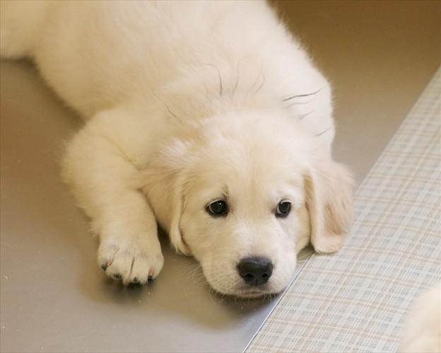 puppy (4).jpg