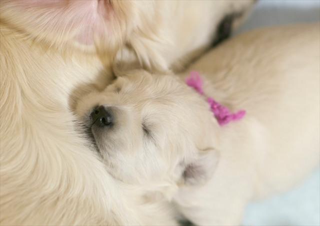puppy (5).jpg