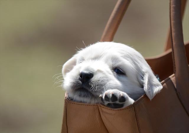 puppy (9).jpg