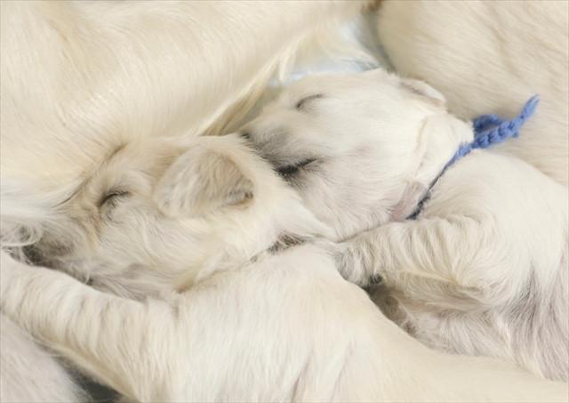 puppy (7).jpg