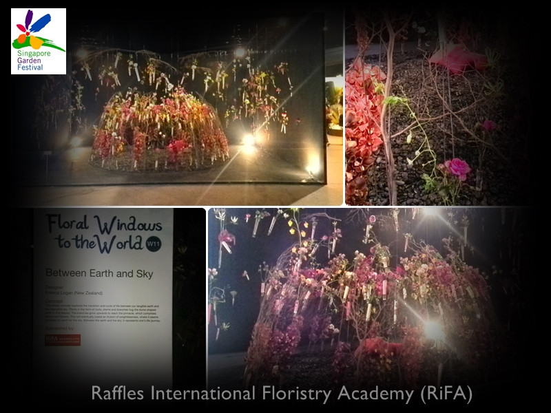 Floral Window by Franca Logon.jpg