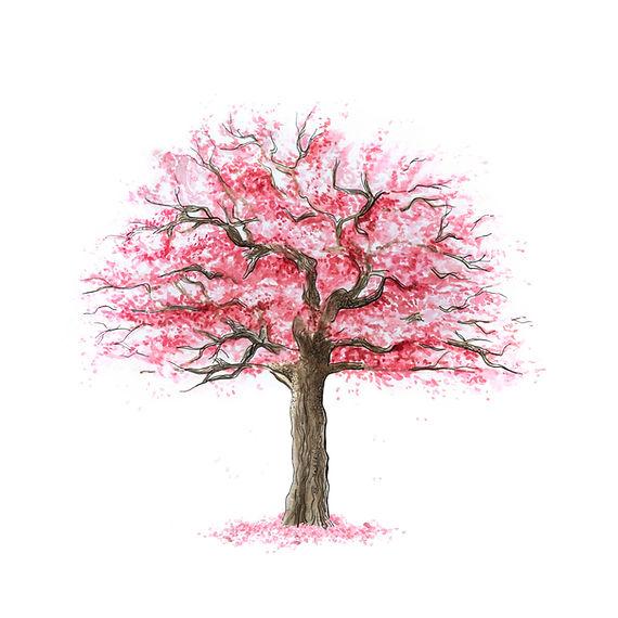 1. kersenboom los.jpg