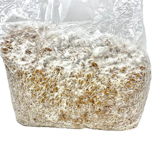 5 lb Grain Spawn (Gen 2)