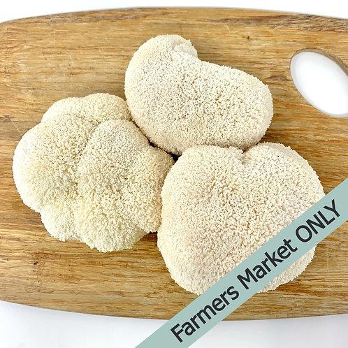 Fresh Lions Mane Mushroom (0.5 lbs)