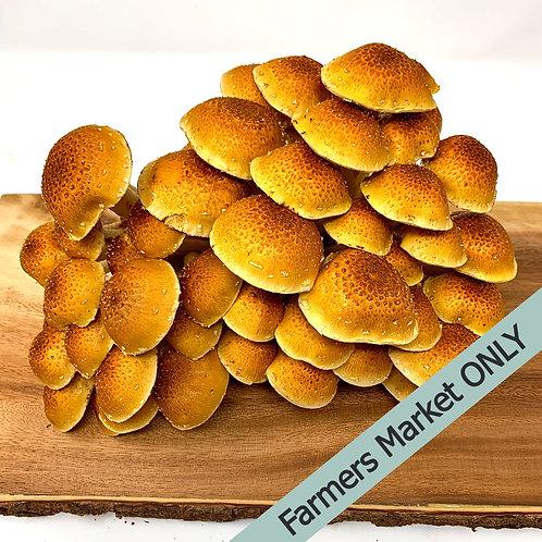 Fresh Chestnut Mushrooms (0.5 lbs)