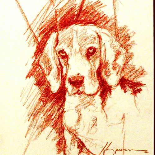 """108 """"Beagle"""""""