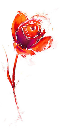 franz-flower.jpg