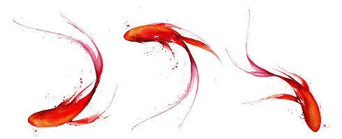 franz-fish.jpg