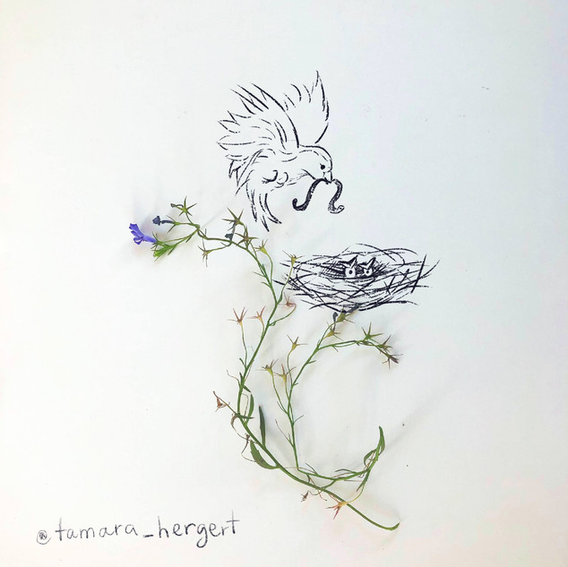 Mama_bird_Sketch_By_Tamara_Hergert.jpg