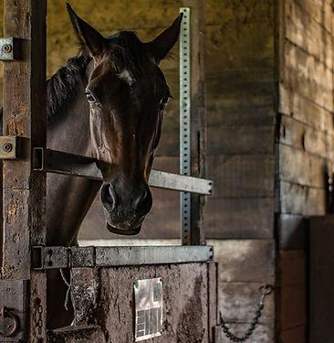 horse-barn-golden-gate.jpg