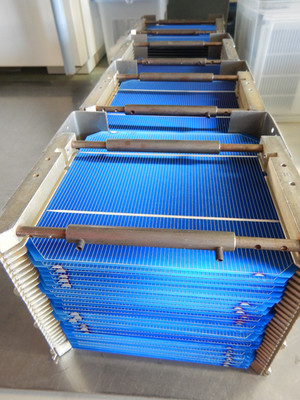 Container of 25 PV cells after printing and drying of the front side metallization (silver).