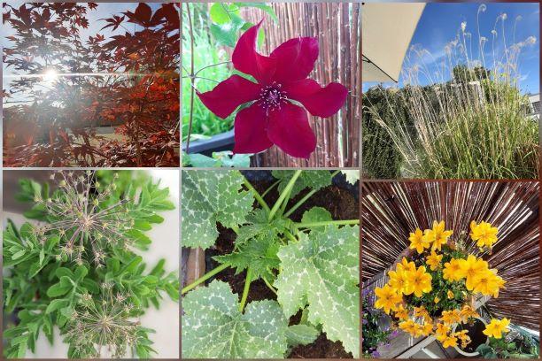 Blumen und Grün rund um die Lounge. Von Kirsten Surwehme