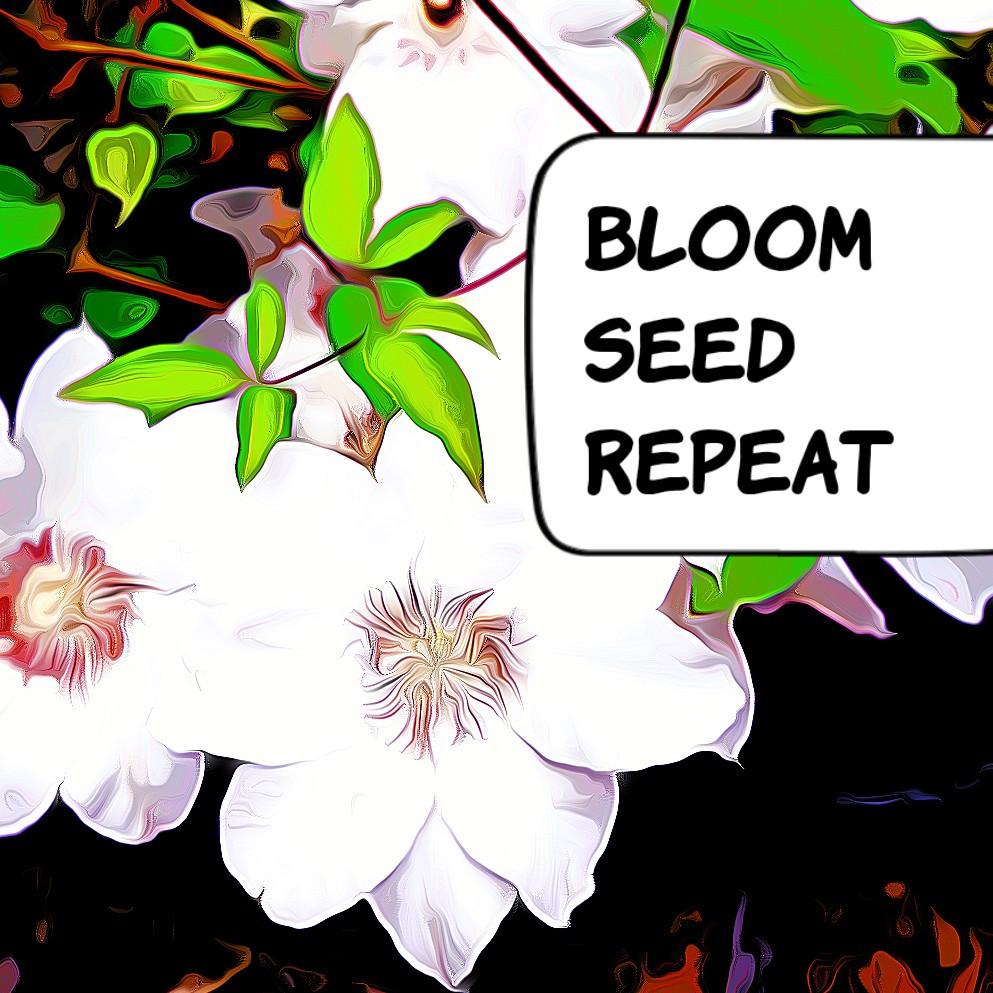 Bloom - seed -repeat. Von Kirsten Surwehme