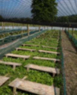 Snail farm, Garyhil, Co. Calow, escargot frm, Gaelic Escargot, snail farmers