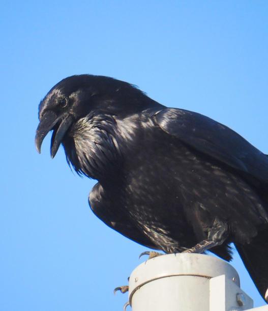 LA Bird Series - 04