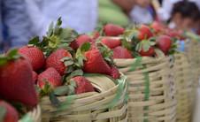 Mercado de la Fresa