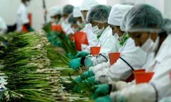 Sector alimentario pide no alterar el TLCAN