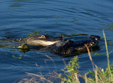Things to do in Gainesville, FL: Sweetwater Wetlands Park