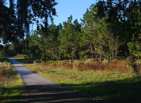 Safely Bike in Gainesville, FL - Hawthorne Trail