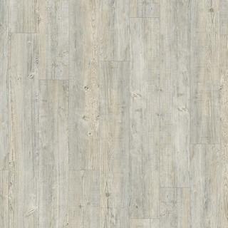 latin-pine-24242.jpg