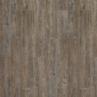 latin-pine-24868.jpg