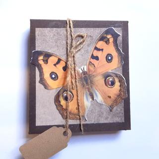 Geschenkverpackung Schmetterling