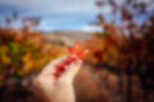 Fall in Napa-2.jpg
