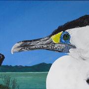 Pied Cormorant at Kaiaua