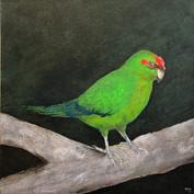 Native Bird 1