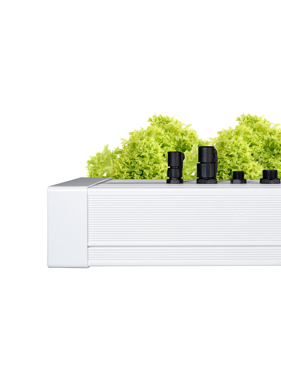 Grow3 grow light fixture with lettuce behind it