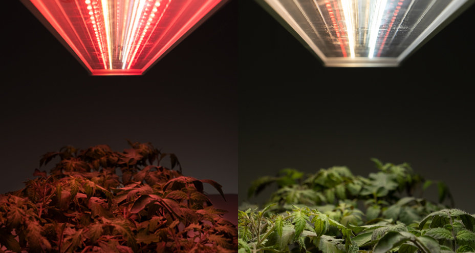 Grow3 led grow light fixtures with different color ratios