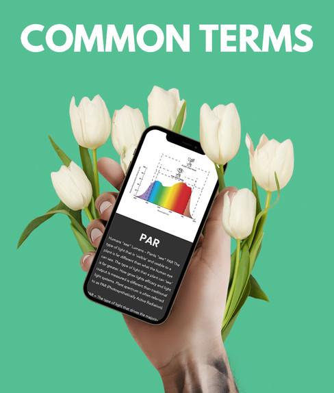 Common terms.jpg