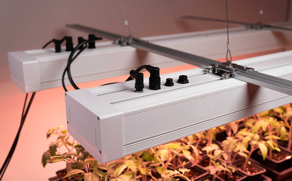 two grow3 LED grow light fixtures hanging above plants