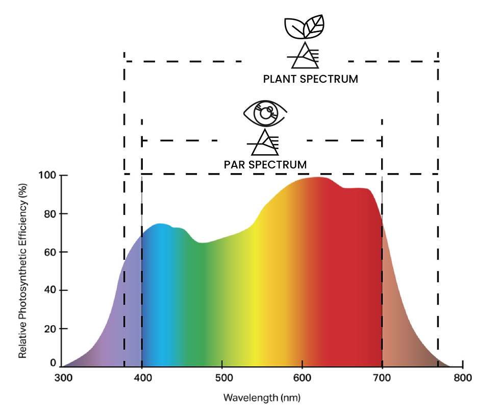 Example of photosynthetically active radiation