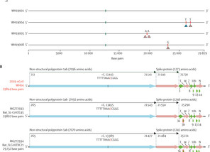Genomic characterisation and epidemiology of 2019 novel coronavirus: implications for virus origins