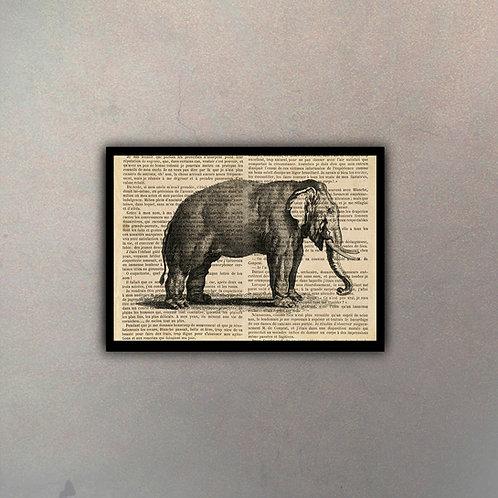Elefante Fondo Vintage