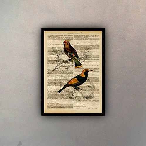 Pájaros III Fondo Vintage