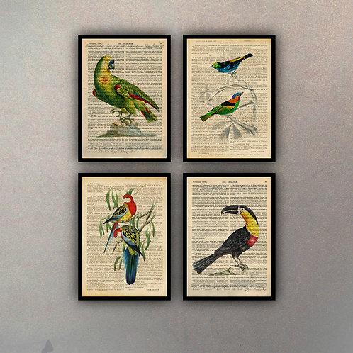 Set Aves Fondo Vintage (4 Cuadros)