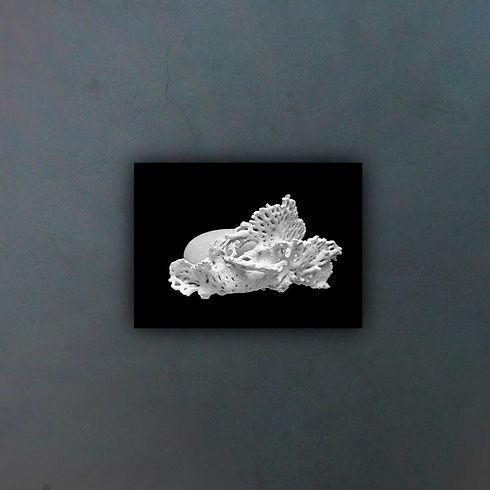 coral-20497---copia_fondo2.jpg